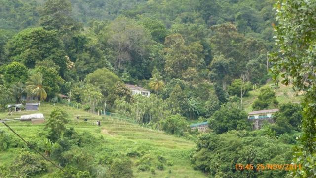 20111201-214405.jpg